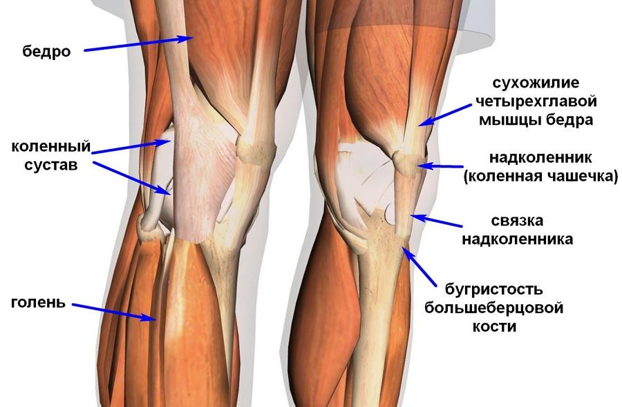 Отчего болит под коленом чебоксары эндопротезирование тазобедренных суставов коксартроз