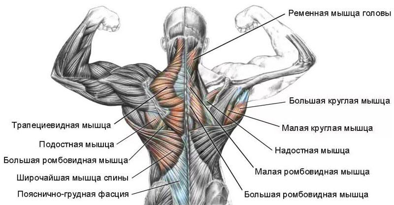 Мышечная боль в пояснице причины