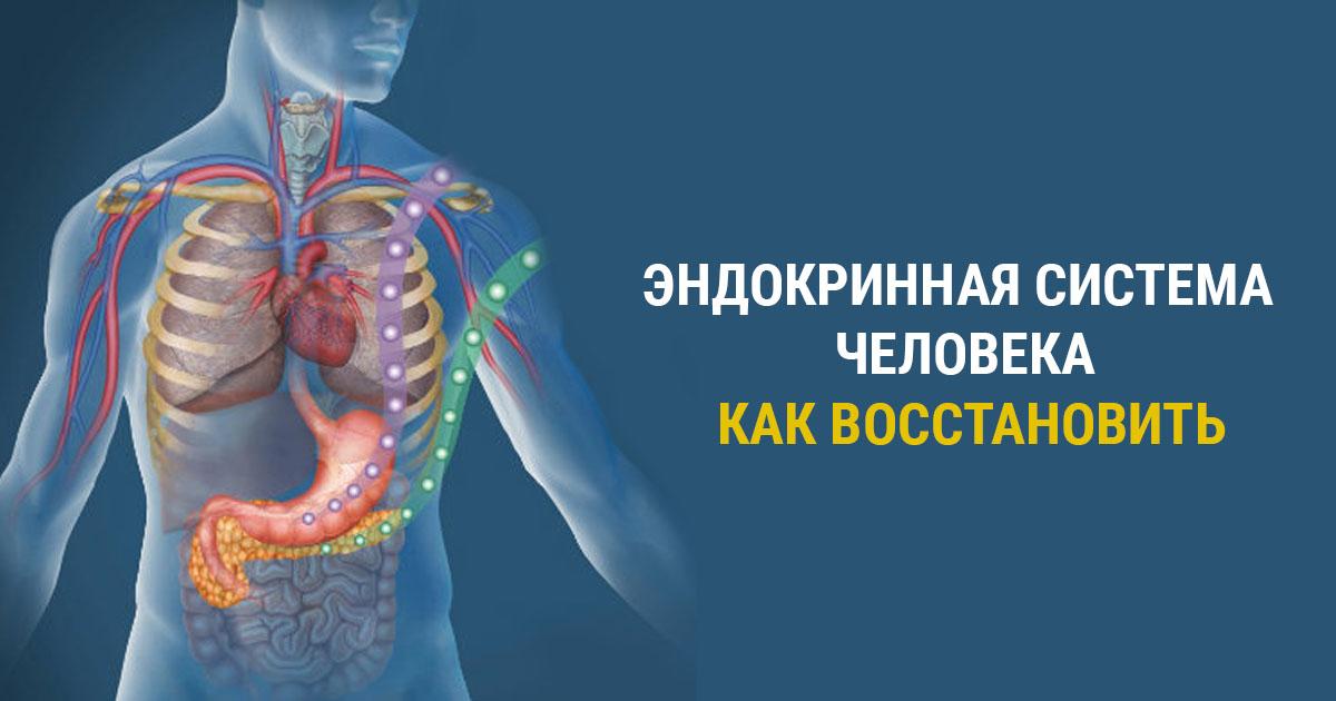 Эндокринная система человека и лечение нарушений ее работы